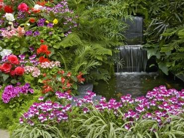 bahce-bitkileri.jpg